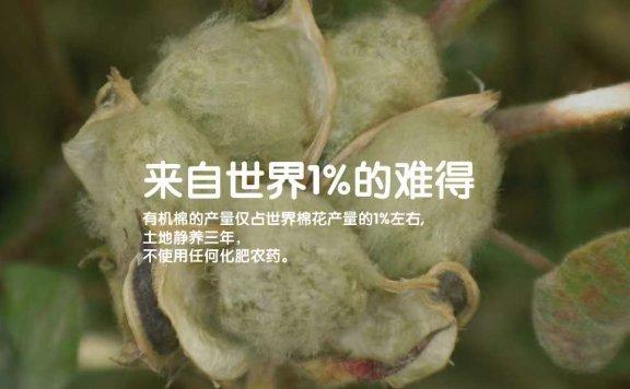 什么是有机棉?有机棉和纯棉的区别在哪里?